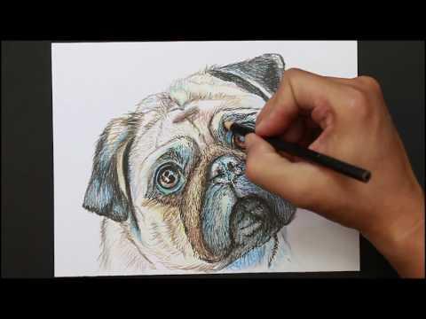 Como dibujar a un Perro Pug