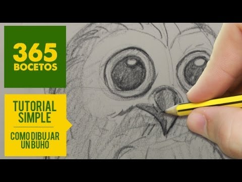 Como dibujar un Búho realista