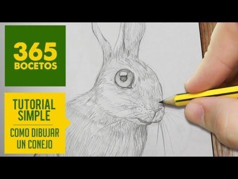 Como dibujar un conejo realista