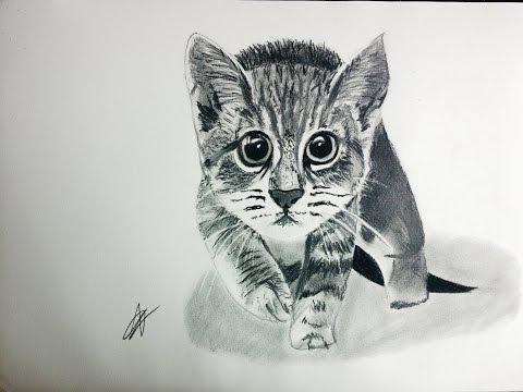 Cómo dibujar un Gato en blanco y negro