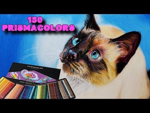 Como dibujar un Gato siamés realista con lápices de colores