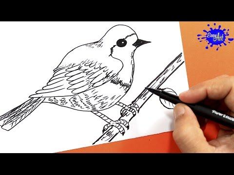 Como dibujar un pájaro fácil