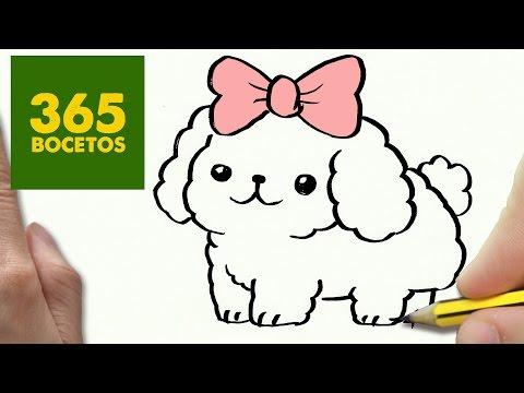 Como dibujar un perro Bichón Boloñés kawaii