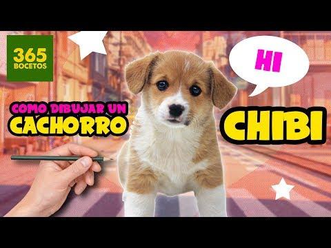 Como dibujar un perro chibi