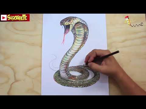 Como dibujar una Cobra en 3D